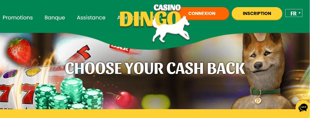 cashback sur Dingo